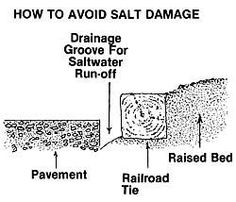 How to Avoid Winter Salt Damage | buckeyegardening.com