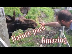 nature park and Labrador moose adventures Newfoundland, Moose, Labrador, Canada, Adventure, Park, Youtube, Nature, Travel