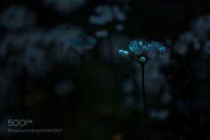 Flowers by RaedAbuRamouz #Landscapes #Landscapephotography #Nature #Travel #photography #pictureoftheday #photooftheday #photooftheweek #trending #trendingnow #picoftheday #picoftheweek