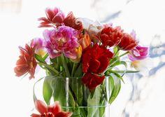 Tulppaanit kuuluvat keväiseen maljakkoon. Viherpihan ohjeilla saat ne kestämään!