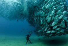 Les petits poissons dans l'eau.
