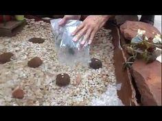 Mini Lago de carpa (casa dos Milani) - YouTube