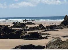 Dog-friendly beach offering expansive rock pools & swimming, plus seasonal lifeguards & tea gardens. Devon Holidays, Devon Cottages, Tea Gardens, Outside Dogs, Dog Friendly Holidays, Luxury Glamping, Devon And Cornwall, Stone Barns, Farm Stay