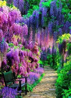 The Wisteria Tunnel at Kawachi Fuji Gardens, Kitakyushu, Japan - Natural Wonders Around the World You'll Have to See to Believe - Photos Beautiful Landscapes, Beautiful Gardens, Beautiful Flowers, Beautiful Scenery, Flowers Nature, Trees With Purple Flowers, Photos Of Flowers, Spring Flowers, Beautiful Things