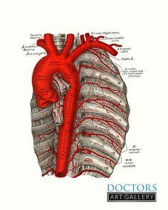 Medicina_Pastoralis_Aorta_8x10.jpg