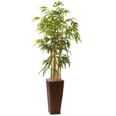 4' Bamboo Plant w/ Decorative Planter * You can find more details by visiting the image link.