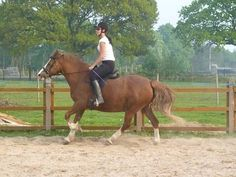 Hacking horse wanted Great Manchester My Horse, Horses, Wanted Ads, Manchester, Places, Animals, Animales, Animaux, Animal