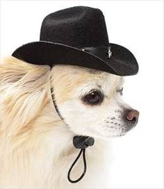 Cowboy Hats for Dogs #chihuahua