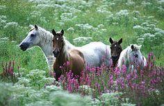 Joy Alfandre - Wild Ponies