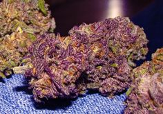 """weed marijuana purple dank ganja bud cannabis"" - pretty in purple, and mouth watering  ~:^]>"