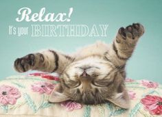 It's Your Birthday - Happy Birthday Funny - Funny Birthday meme - - Relax! It's Your Birthday The post Relax! It's Your Birthday appeared first on Gag Dad. Cat Birthday, Birthday Love, Animal Birthday, It's Your Birthday, Birthday Memes, 50 Birthday Quotes, Birthday Month, Funny Happy Birthday Wishes, Happy Birthday Pictures