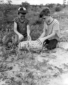 Florida Memory - Johnny Suggs and Rogers Goolsby sitting in a watermelon field - Oxford, Florida