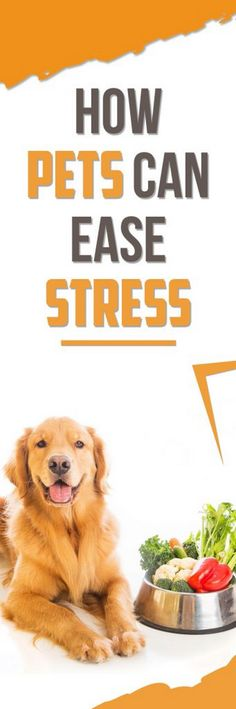 How Pets Can Ease Stress