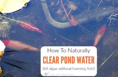 How to keep pond water clear naturally and get rid of pond algae 47 diy garden pond waterfall ideas