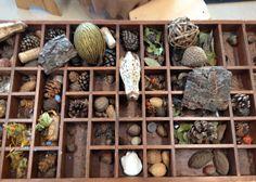Reggio Emilia: Collections - Fairy Dust Teaching