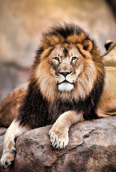 King of the Jungle! (by Todd Ryburn).