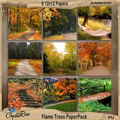 Flame Trees Paper Pack