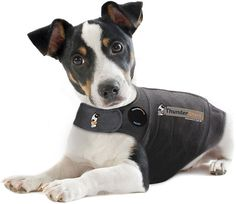 Dog wearing Thundershirt -- SAFE - Applies gentle, constant pressure, similar to swaddling an infant. EASY TO USE - Just put it on and watch the results. No training required. EFFECTIVE - Over 80% success rate as reported by thousands of families, vets and trainers. MANY USES - For all types of anxiety, fear, and over excitement issues. Anytime calming may help, a ThunderShirt may help.