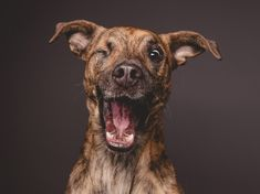 German Photographer Gets Up Close And Personal To Capture Dogs' Expressions