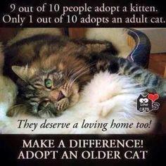 Interesting idea adopting a mature cat advice