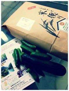 【福島県 有限会社やまだズ こしひかり】    福島県会津地方にあるお米農家さんからのコシヒカリがおいしくてビックリ☆この時期なのに新米かと思った。「有限会社やまだズ」さんというところのコシヒカリなんですが、会津のコシヒカリは最上位の特Aクラスなんですね。お米がキラキラ光ってました。丁寧なメッセージと、新鮮なキューリ&ズッキーニを入れてくださってて、そのお野菜もすこぶる美味しかったです。一生懸命、頑張ってるんだね。じ〜んときました。今度、お餅も頼んでみよう♬( http://www.geocities.jp/totimizu/index.htm)