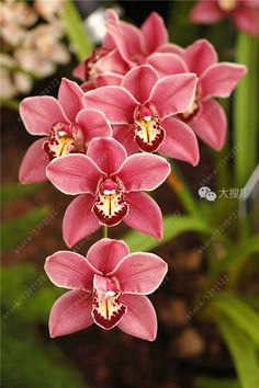 Beautiful Orchid~