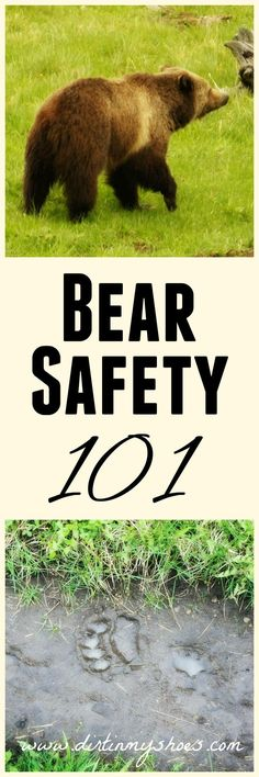 Do you know what to do if you see a bear while hiking or camping?? You need to read these awesome tips to stay safe outdoors -- written by a former park ranger!