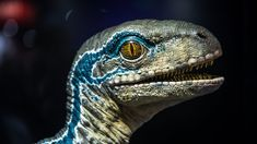 We take a look at a few high-end collectibles from Jurassic Park and Jurassic World at this year's Comic-Con. Chronicle Collectibles shows us their life-size. Blue Jurassic World, Jurassic World Dinosaurs, Jurassic World Wallpaper, Dinosaur Pictures, Animal Games, T Rex, Character Art, Comics, Animals