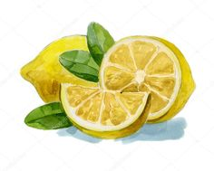 Illustration about Watercolor hand drawn picture of lemon with leafs. Illustration of lemon, drawing, fresh - 32826473 Watercolor Fruit, Fruit Painting, Easy Watercolor, Watercolor Paintings, Colorful Drawings, Art Drawings, Fruit Doodle, Lemon Art, Fruits Drawing