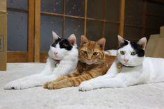 Cat_2012.10.26