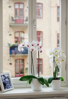 Orquídeas en la ventana