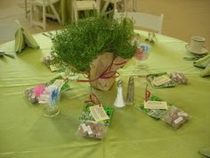 fresh potted herb centerpieces (giveaway) and seed balls for each guest