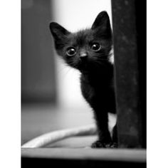 I want a black kitten sooooooo bad!!!:(