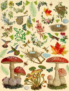 Woodland and forest, flora and fauna, plants and animals, includes mushrooms, flowers, birds, butterflies, bees, foliage, nests and eggs. Beautiful colorful inspirational nature elements for scrapbooking, journaling, and other mixed media. This scrapbook page is part of a multiple page set which includes a set of assorted wings and a page of forest girls with floral garlands to accessorize DIY faeries. Forest girls, Woodland Nymphs can be found here: https://www.etsy.com/listi...