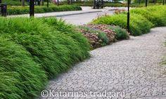 Bildresultat för hakonegräs
