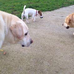 #seguifido #dogpark #roma #dogsitting #asilopercani