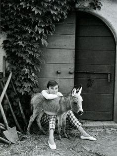 ERMERGEEEEERD. Miniature Donkey  And Audrey Hepburn.