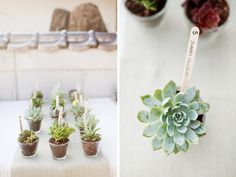 Succulent favors, photo by Shipra Panosian Photography