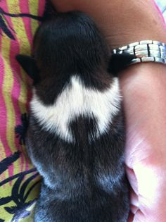 Border Collie with her emblem