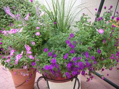 Summer Potted Glory - The Contained Gardener in the desert
