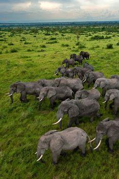 Uganda, Queen Elizabeth Park. Photograph by Joel Sartore, National Geographic