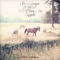 Bill Callahan / Sometimes I Wish We Were An Eagle