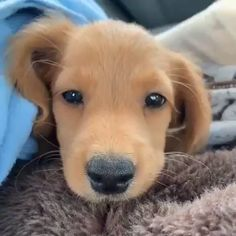 Watch funny and cute dogs and puppies as they are the most lovable pets in the world. Cute Baby Dogs, Cute Little Puppies, Cute Dogs And Puppies, Cute Baby Animals, Animals And Pets, Pet Dogs, Funny Animals, Dog Cat, Funny Dogs