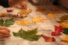 Fall craft for kids - Preserve fall leaves with wax.  Just dip in melted household parafin wax.