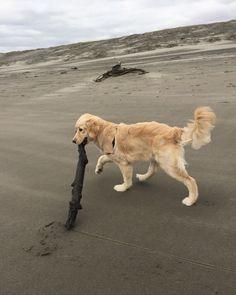 I bought you a stick