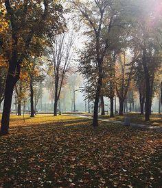 Dreamy fall morning