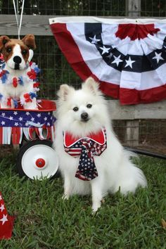These little doggies are all dressed up for a 4th of July BBQ! Dog is Good #dogisgood