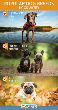 Popular Dog Breeds By Country: Here are some of the most popular dogs, based on countries from around the world. For a complete list, read more!