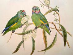 bird prints - Google Search