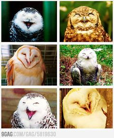 Owls laughing :D